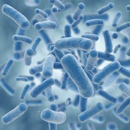 infektionskrankheiten